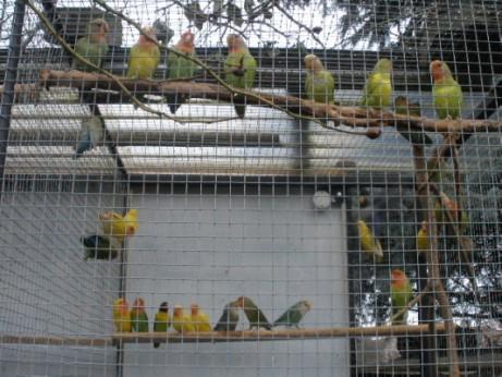 Venkovní voliéra pro papoušky